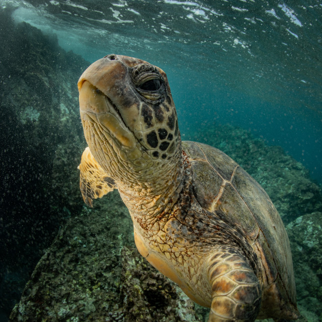 """Turtle up close"" stock image"