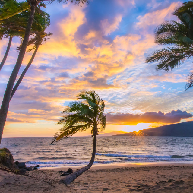 """""""Sunset in a grove of palms"""" stock image"""