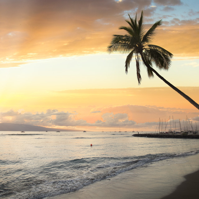 """""""Lone palm stretching to sunset"""" stock image"""