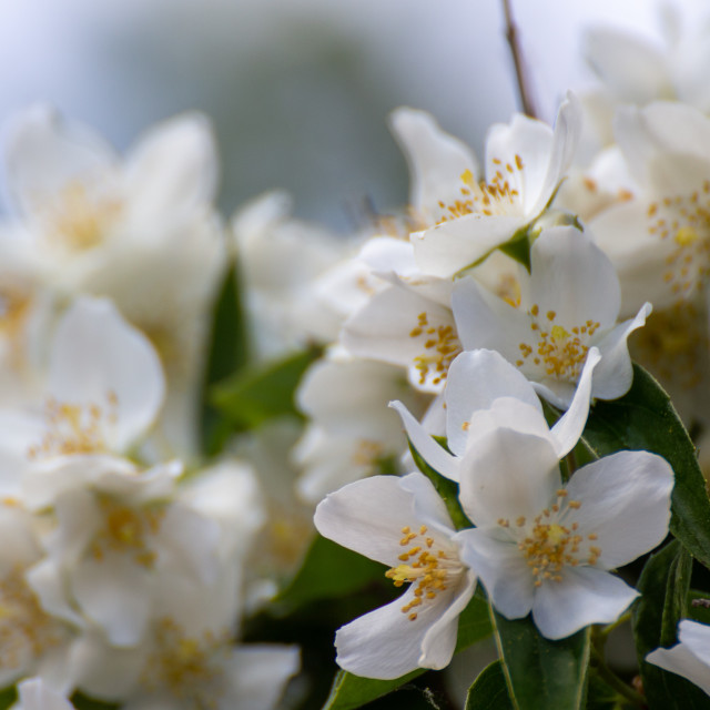 """Springflowers"" stock image"