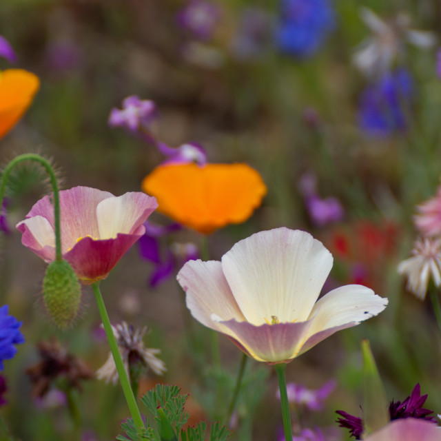 """""""Colorful flowers"""" stock image"""