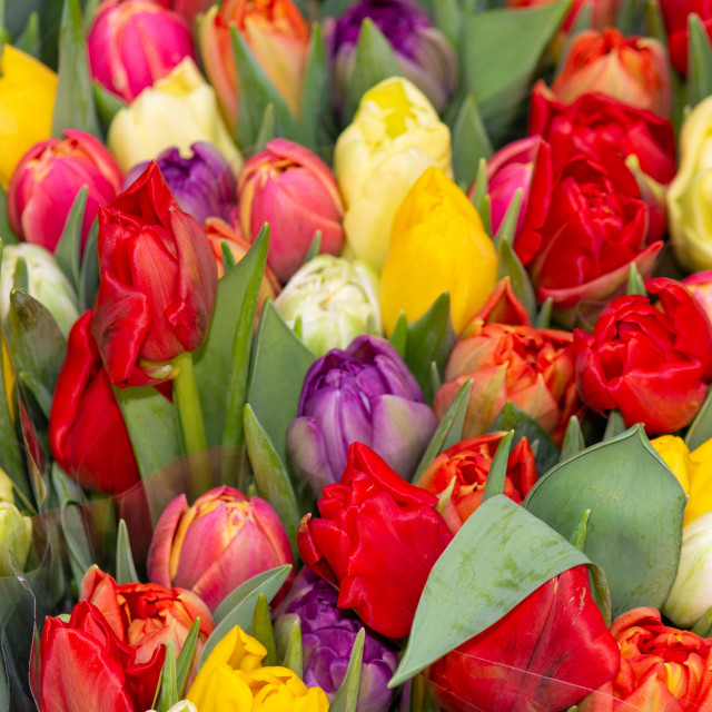 """""""Roses in many colors"""" stock image"""