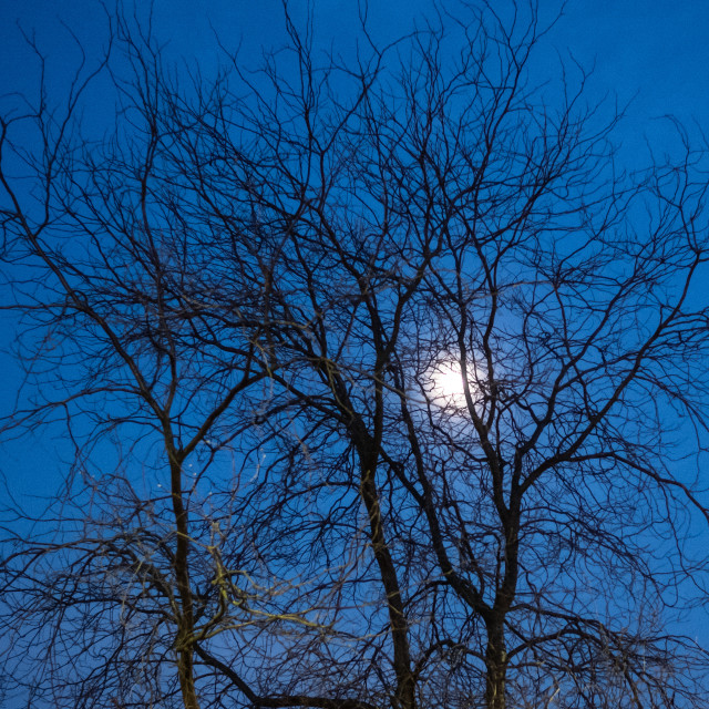 """My Nature - Moon Behind Tree"" stock image"