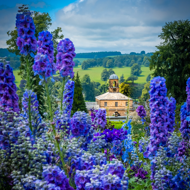 """delphiniums at Chatsworth"" stock image"