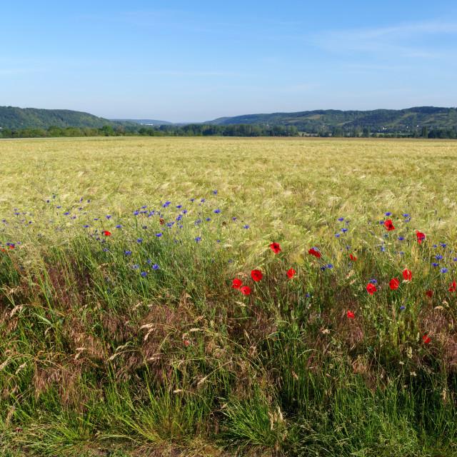 """Limetz-Villez fields"" stock image"