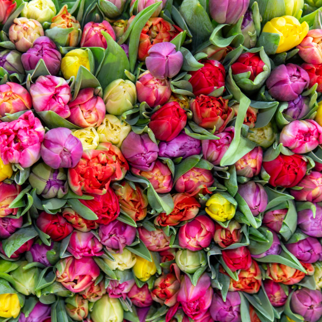 """""""Many colorful flowers"""" stock image"""