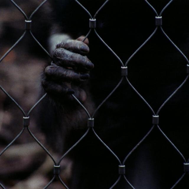 """""""Captive"""" stock image"""
