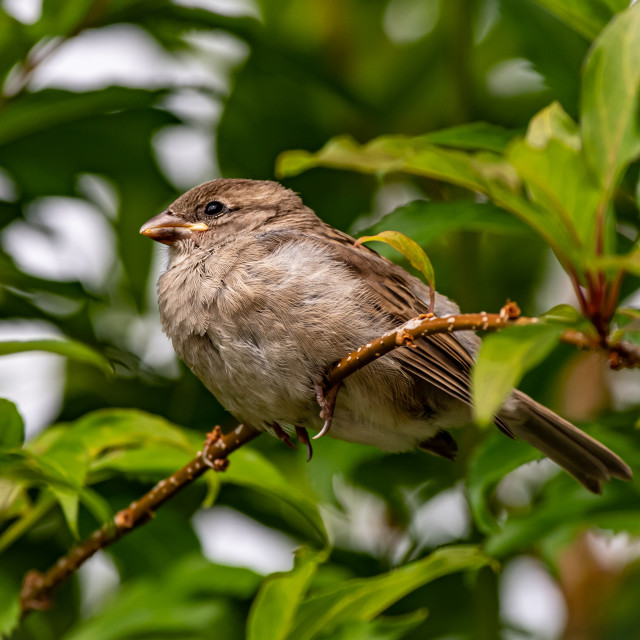 """""""Young sparrow resting after flight lesson"""" stock image"""