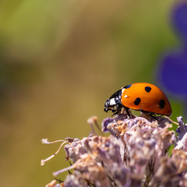 """Ladybird in lockdown garden"" stock image"
