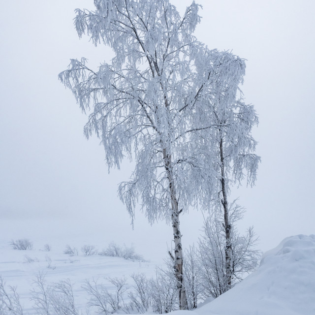 """A cold day in Sweden"" stock image"