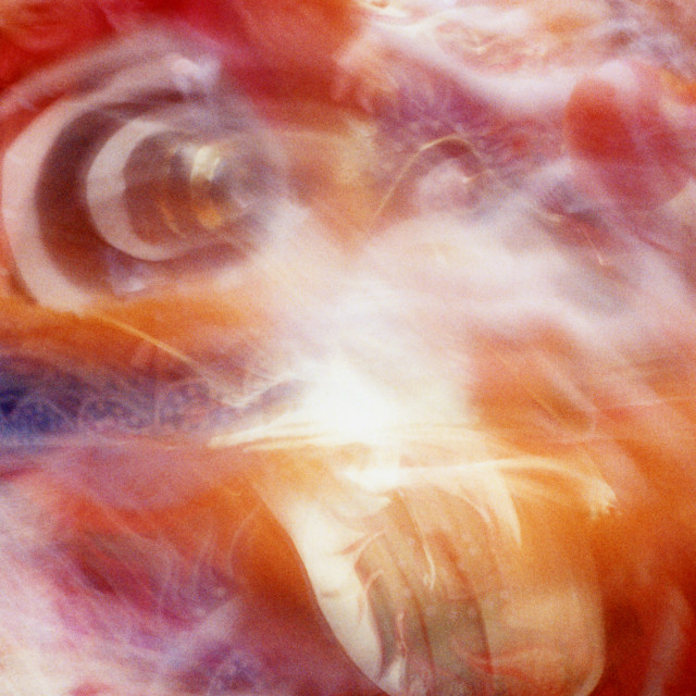 """Spirit of the Dragon Dance"" stock image"