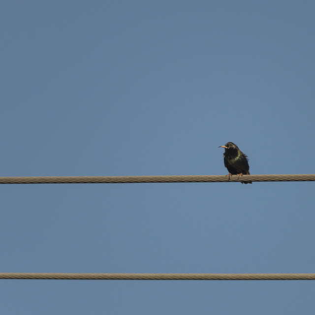"""""""The Lonely Bird"""" stock image"""