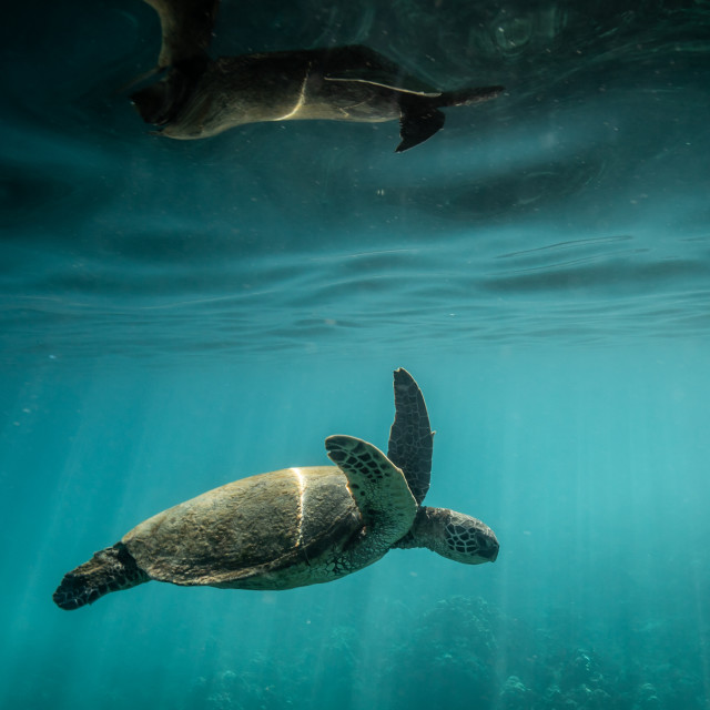 """""""A turtle reflection"""" stock image"""