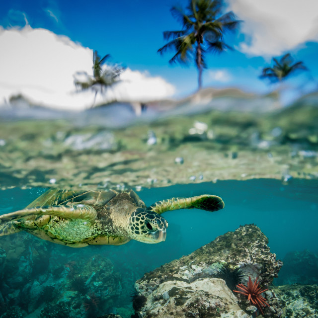 """""""Palms and turtle"""" stock image"""