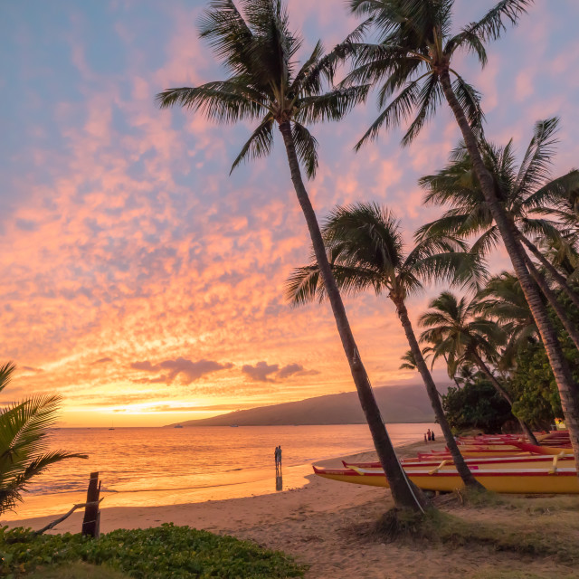 """""""Sunset over palms"""" stock image"""