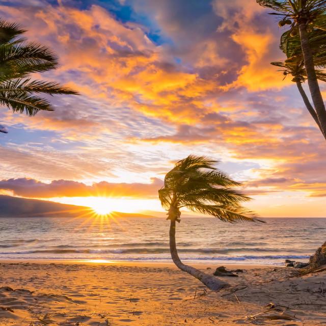 """Bent Palm trees"" stock image"