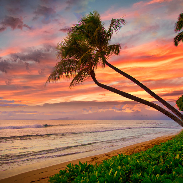 """""""Twin palms hang over a beach"""" stock image"""