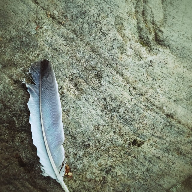 """""""Feather on Stone"""" stock image"""