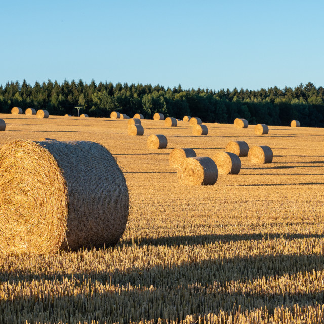"""Hay bales on the field after harvest. Agricultural field. Hay ba"" stock image"