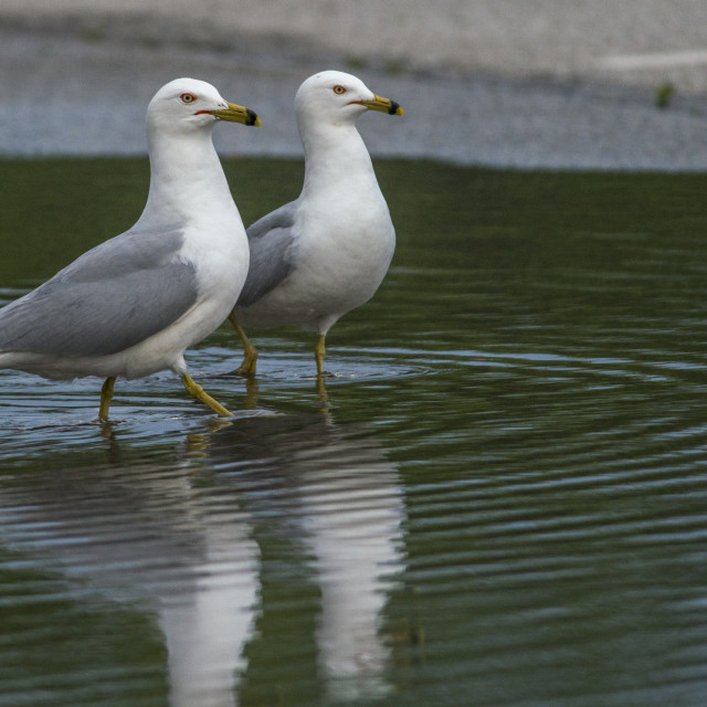 """""""Two Seagulls"""" stock image"""