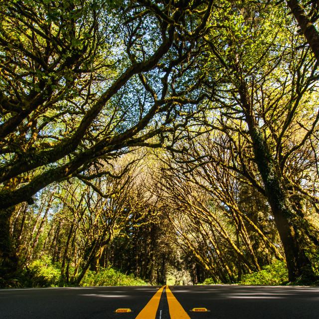 """Roadside Trees"" stock image"