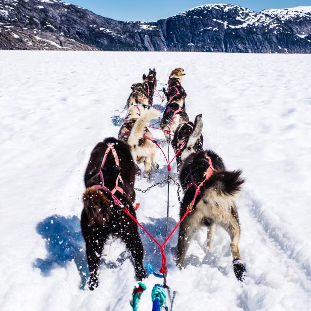 """Dogsledding on the Norris Glacier"" stock image"