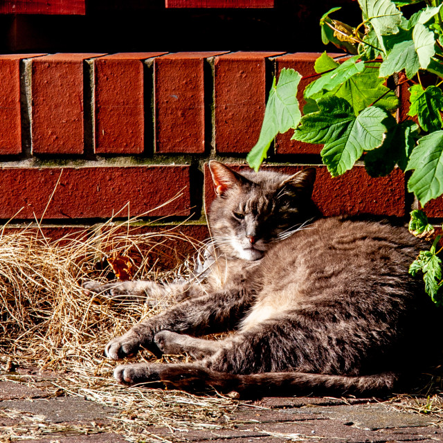 """""""Cat Reclining in the Sunshine"""" stock image"""