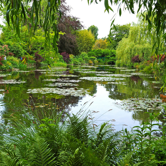 """""""Claude Monet's water garden at Giverny"""" stock image"""