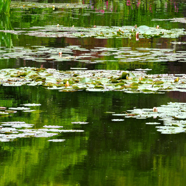 """""""Water Garden at Giverny"""" stock image"""
