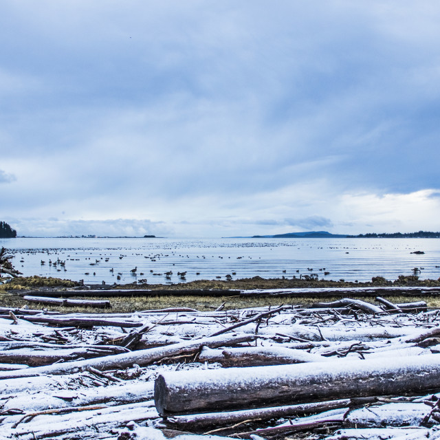 """Winter On The Courtenay River Estuary"" stock image"