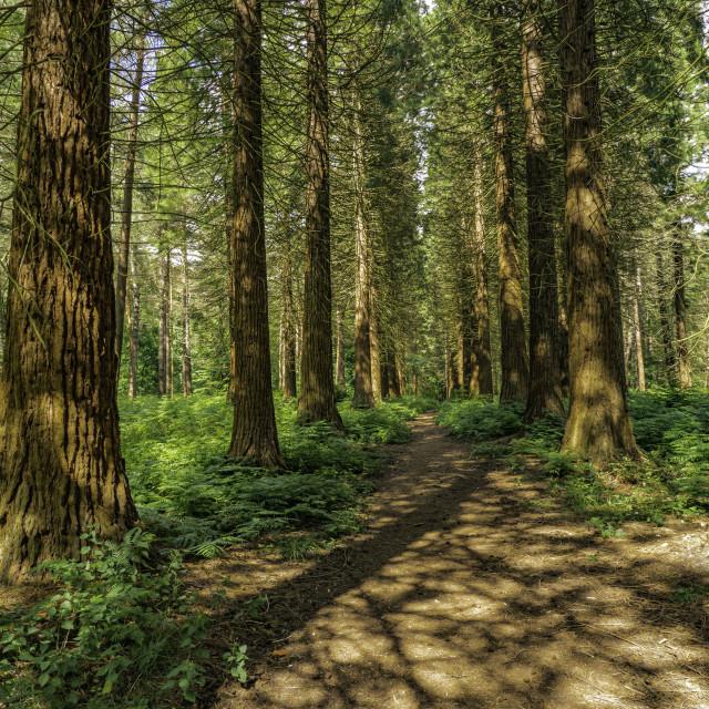 """""""Hertfordshire - Hockeridge Woods"""" stock image"""