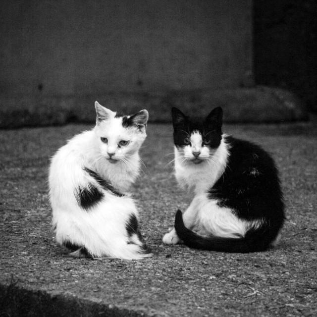 """Monochrome Kittens"" stock image"