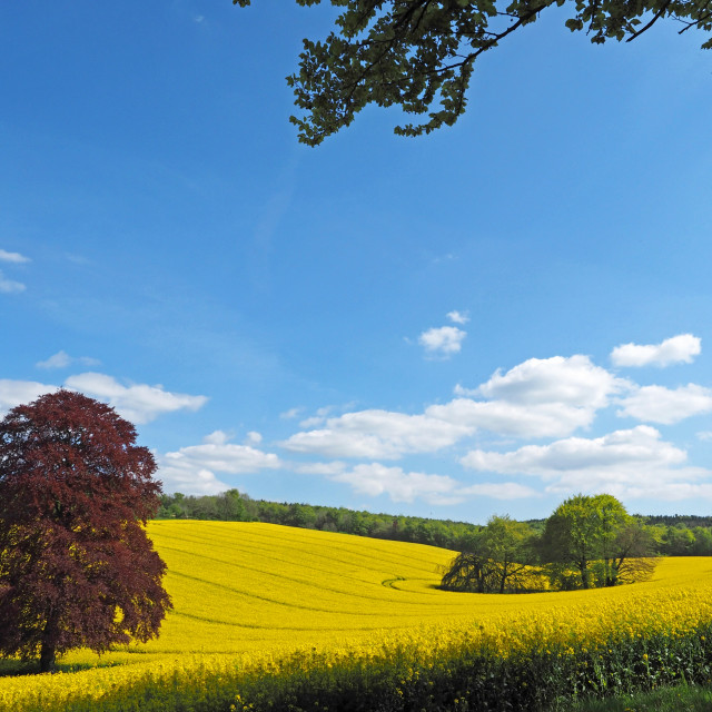 """Springtime in Hampshire"" stock image"