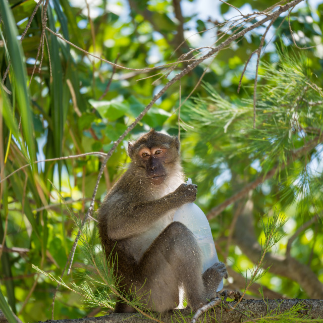 """Monkey on the beach in Thailand"" stock image"