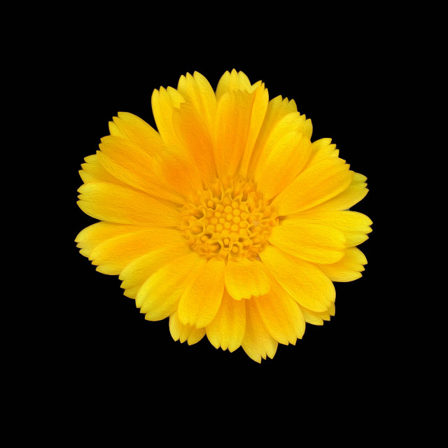 """""""Yellow flower of Sitges"""" stock image"""