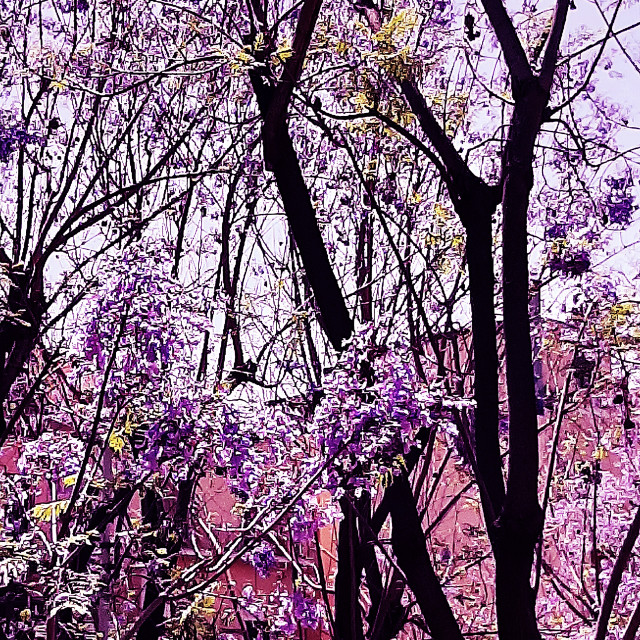 """L'albero viola"" stock image"