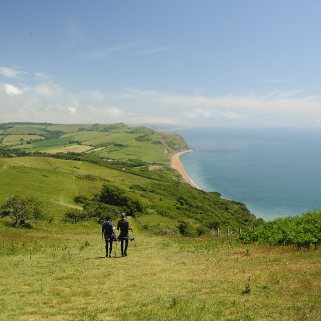 """The path from Golden Cap, Dorset"" stock image"
