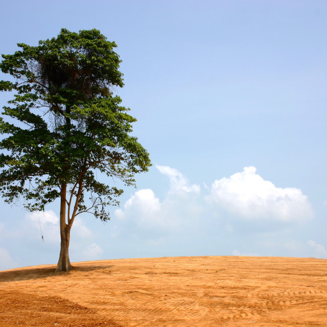 """Last Tree Standing"" stock image"