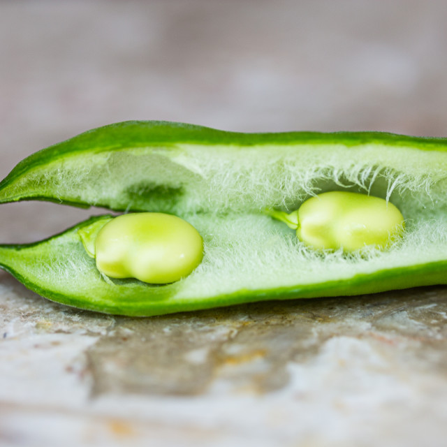 """""""Young first harvest of a broad bean"""" stock image"""