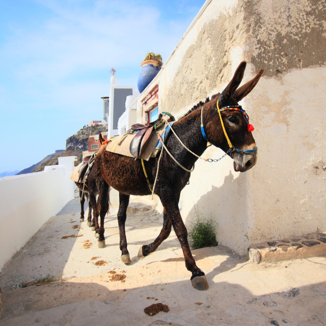 """A donkey used for carrying tourists"" stock image"