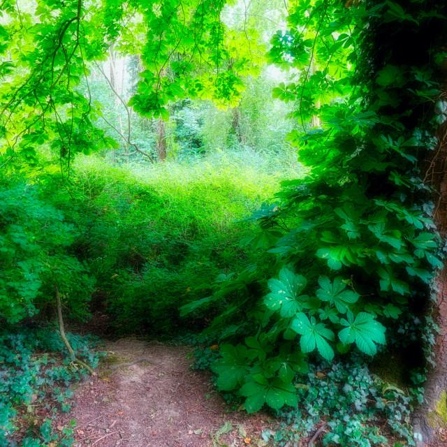 """Lush Greenery : Leafy Trunk"" stock image"