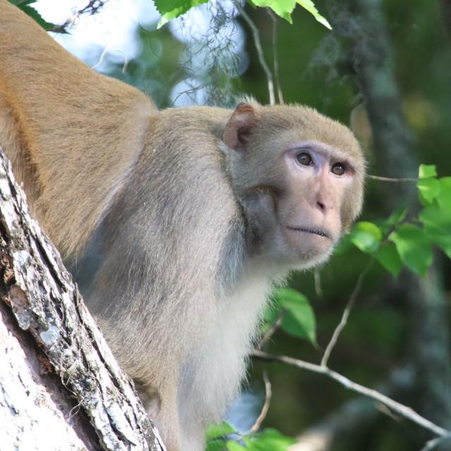 """Monkey on Watch"" stock image"