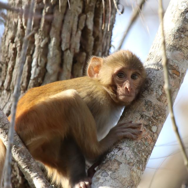 """""""young Monkey"""" stock image"""