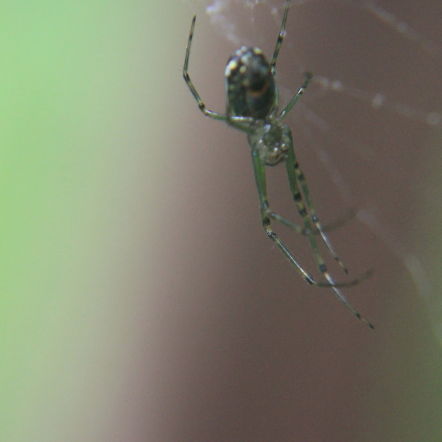 """close up of a spider"" stock image"