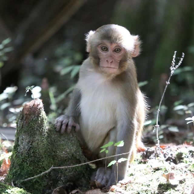 """River Monkey"" stock image"