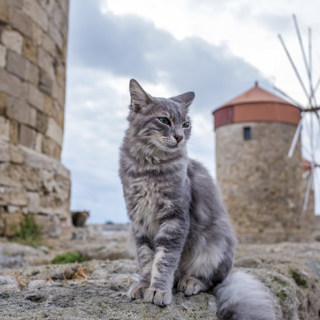 """""""Greek stray cat by the windmills on the harbor of Rhodes island, Greece"""" stock image"""