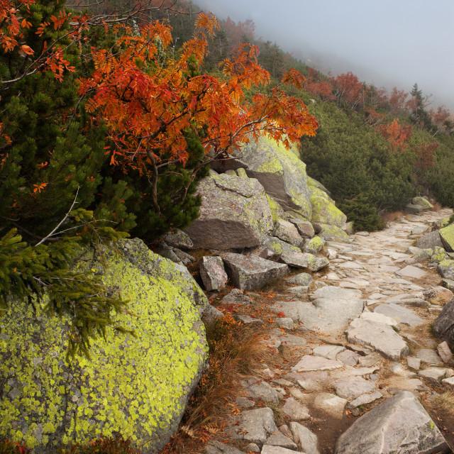 """Path on Mountain Slope"" stock image"