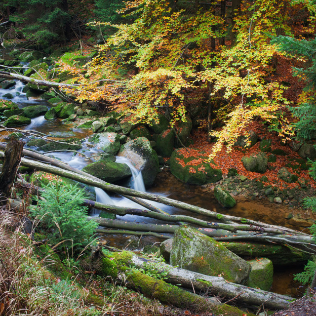 """""""Forest Stream With Fallen Trees"""" stock image"""