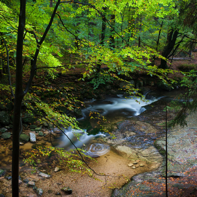 """""""Forest Creek"""" stock image"""