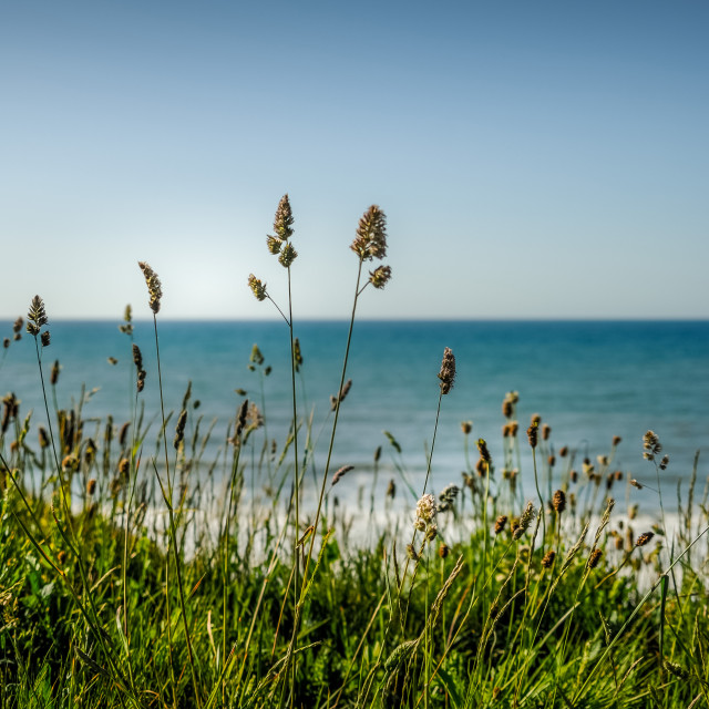 """""""Charmouth morning"""" stock image"""